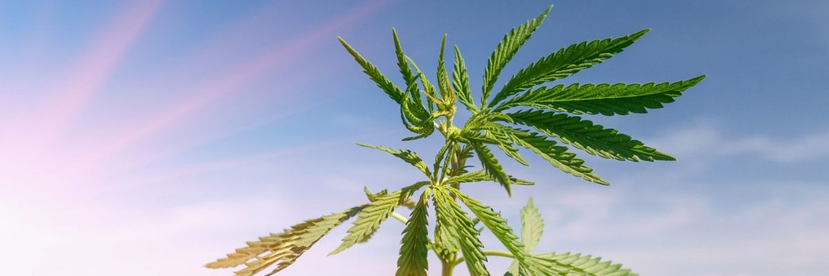 is_cbd_legal_country